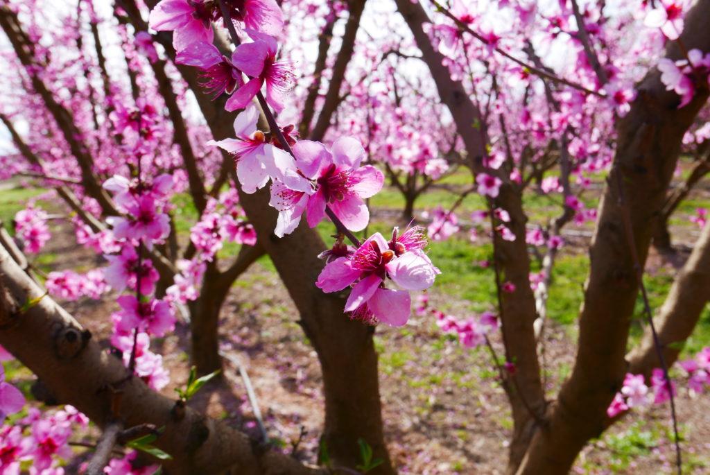 la primavera arriba